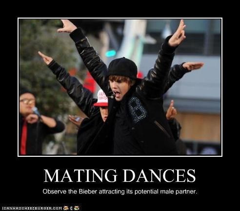 MATING DANCES Observe the Bieber attracting its potential male partner.