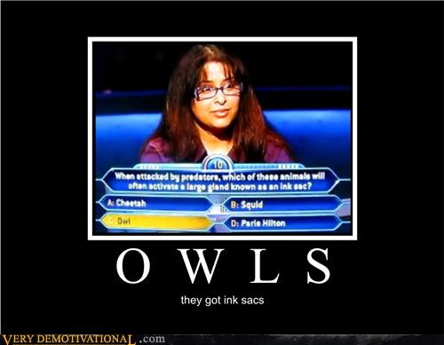 idiots,ink sacs,owls,who wants to be a millionaire,wtf