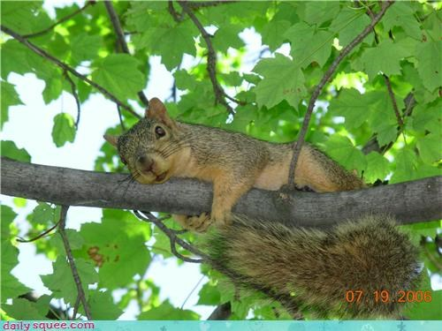 pose,squirrel,tree