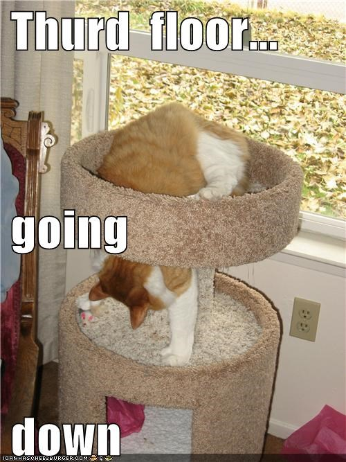 caption,captioned,cat,climbing,down,elevator,floor,going,tabby,third