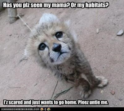 Has you plz seen my mama? Or my habitats? I'z scared and just wants to go home. Pleez untie me.