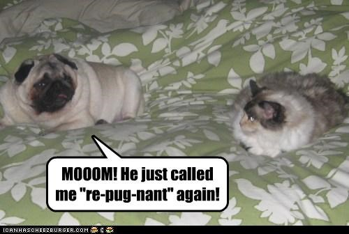 cat,mean,mom,name calling,pug,pun,repugnant