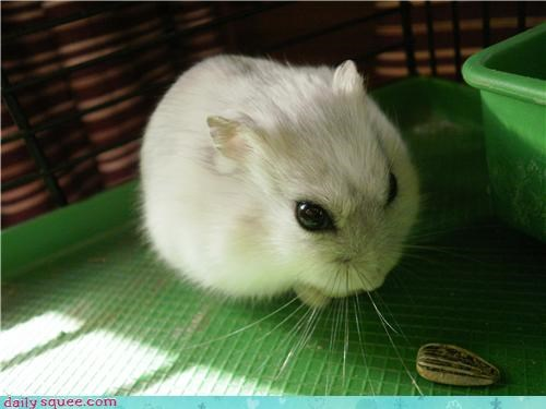 cute floof user pets whatsit wednesday - 4070673920