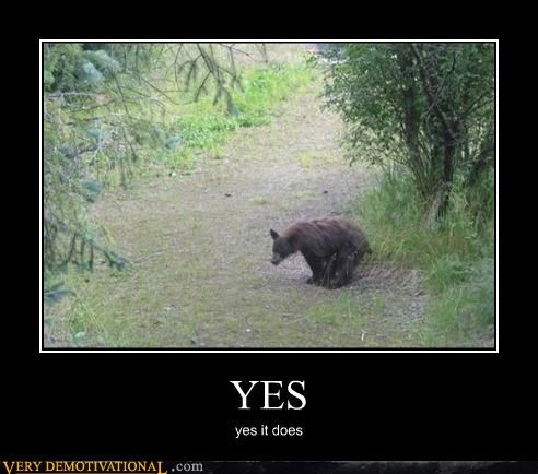 bears,hilarious,nature,old adages,pooping,questions,rhetoric,woods