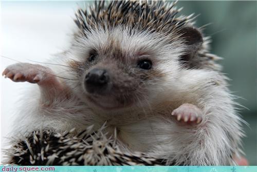 cute hedgehog pet - 4071069440