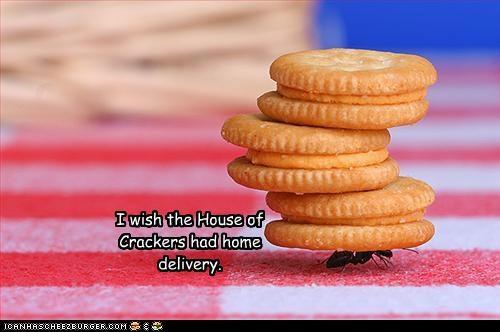 Cheezburger Image 4071383296