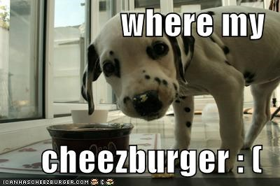 Cheezburger Image 4071457024