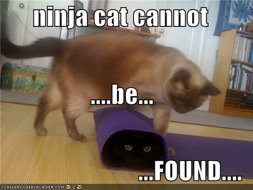 cannot caption captioned cat Cats confusion found hiding ninja cat rug stealth - 4071495168