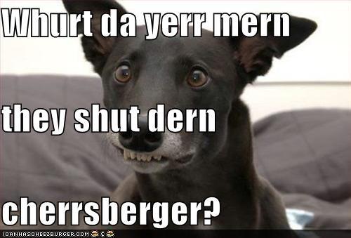 Cheezburger Image 4071550464
