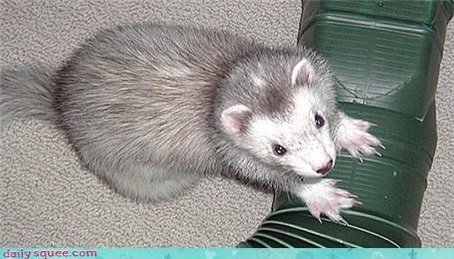 cute ferret pet - 4072402176