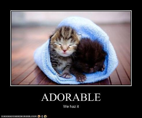 adorable caption captioned cat cute kitten squee tiny we has it - 4072548608