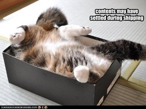 box caption captioned cat contents cute funny label notification settled shipping upside down warning - 4072700928