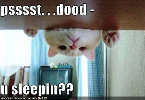 asleep caption captioned cat dude pssst question sleeping waking up you - 4072984576