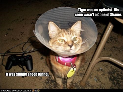 caption,captioned,cat,cone of shame,food,funnel,optimism,optimist,pragmatism,win