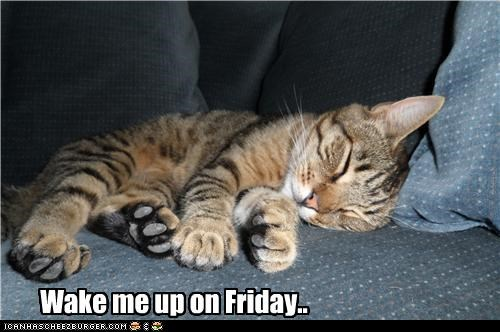 caption,captioned,cat,cute,do not want,FRIDAY,sleeping,tired,wake me up
