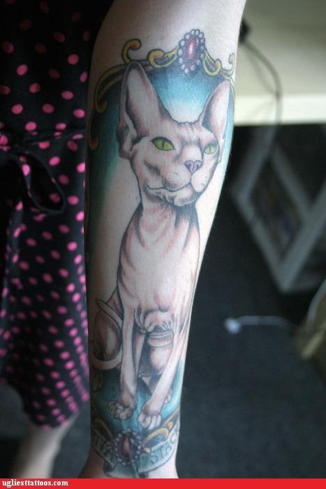 animals Cats - 4073395968
