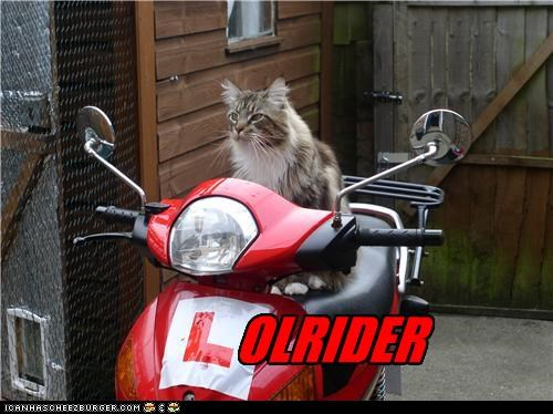 caption captioned cat lol lowrider mang coon motorcycle rider riding style vehicle - 4073629440