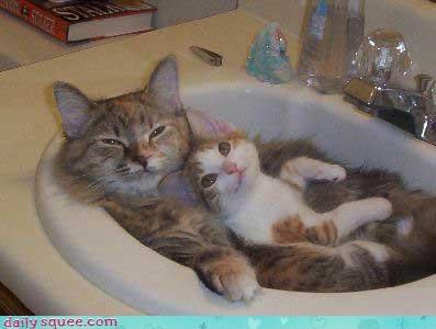 face kitten mama - 4074510848