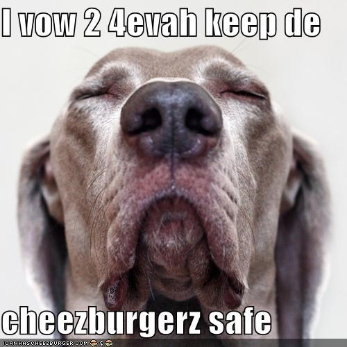 Cheezburger Image 4075304960