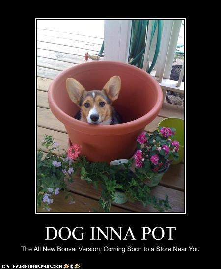 DOG INNA POT The All New Bonsai Version, Coming Soon to a Store Near You