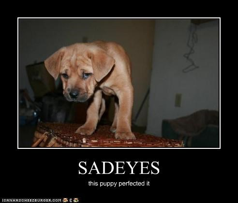 SADEYES this puppy perfected it
