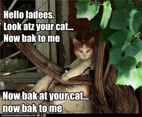 Hello ladees. Look atz your cat... Now bak to me Now bak at your cat... now bak to me