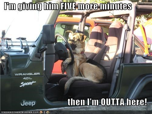 driving,five more minutes,german shepherd,impatient,jeep,outta here,waiting