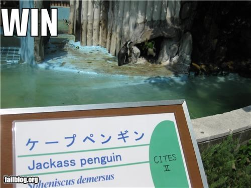 awesome failboat name penguin signs - 4077422336