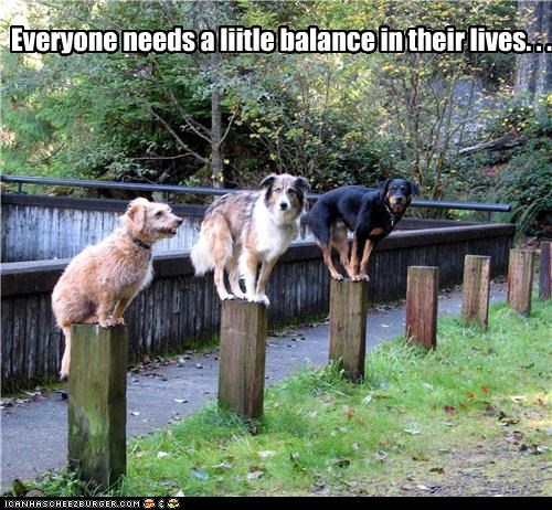 Everyone needs a liitle balance in their lives. . .