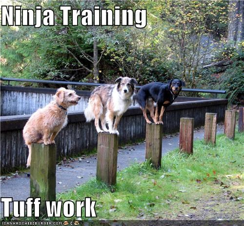 balancing,elkhound,hard work,ninja,poles,rottweiler,sheepdog,tough,training
