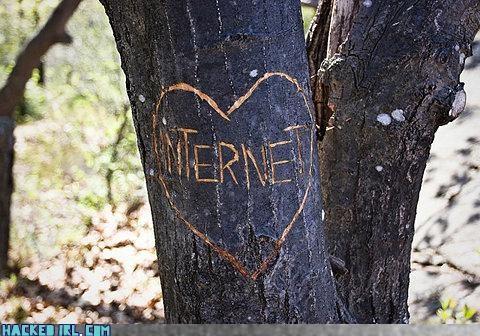 graffiti internet tree - 4077660672