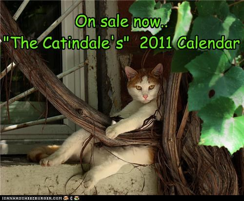 advertisement calendar caption captioned cat handsome on sale order posing tabby today