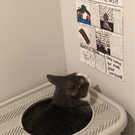 litter box Cats newspaper - 4078085