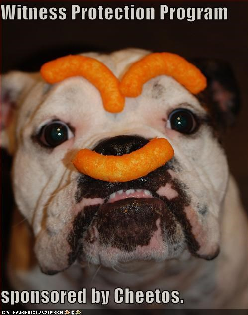 bulldog,cheetos,Hall of Fame,silly,silly face,sponsored,witness protection program