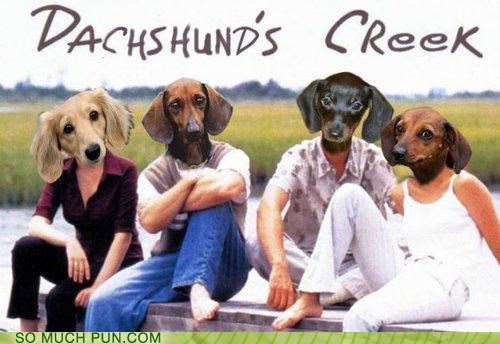 dachshund dawsons-creek humping innuendo lead actors makes sense popular show teen drama teenagers wiener wiener dog - 4078420736