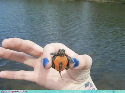 nerd jokes Pokémon turtle - 4078789632