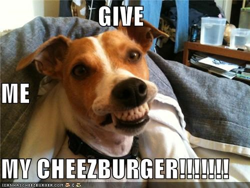 Cheezburger Image 4078819584