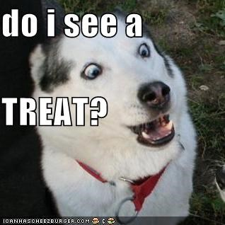 critters do i see dogs OMG face those EYES treat - 4078824192