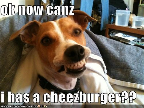 Cheezburger Image 4078845184