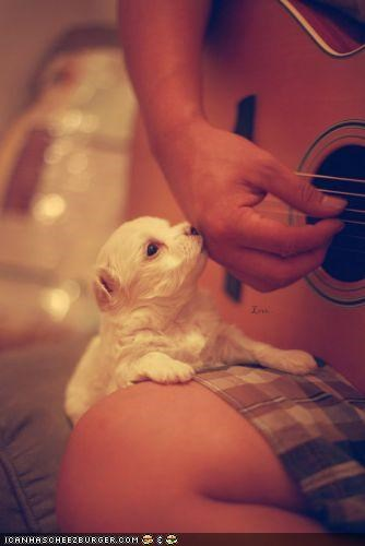 cute cyoot puppeh ob teh day guitar Music playing puppy question singalong squee whatbreed - 4079279360