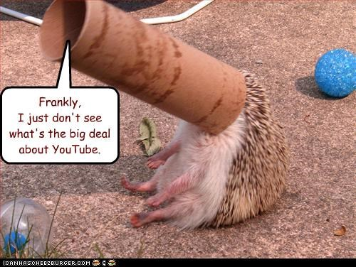 caption captioned confused hedgehog pun unimpressed whats-the-big-deal youtube - 4079315968