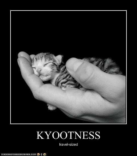 KYOOTNESS travel-sized