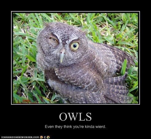 OWLS Even they think you're kinda wierd.