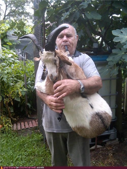 goat,instrument,old guy,puns,wtf