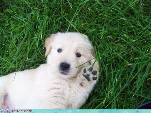 hand,puppy,wave