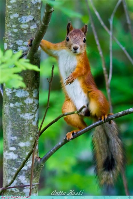 cute squirrel - 4081455360