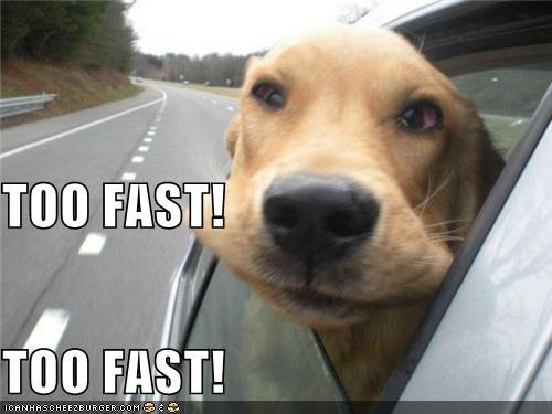 cars,cheeks,critters,dogs,slow down,too fast,wind
