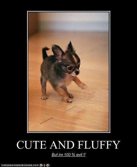 CUTE AND FLUFFY But im 100 % evil !!
