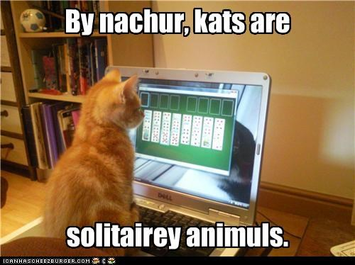 animals,caption,captioned,cat,Cats,computer,explanation,free cell,game,kitten,nature,pun,solitaire,solitary,tabby