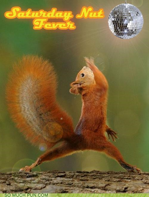 acorn,dancing,disco,disco ball,john travolta,nuts,saturday night fever,squirrel
